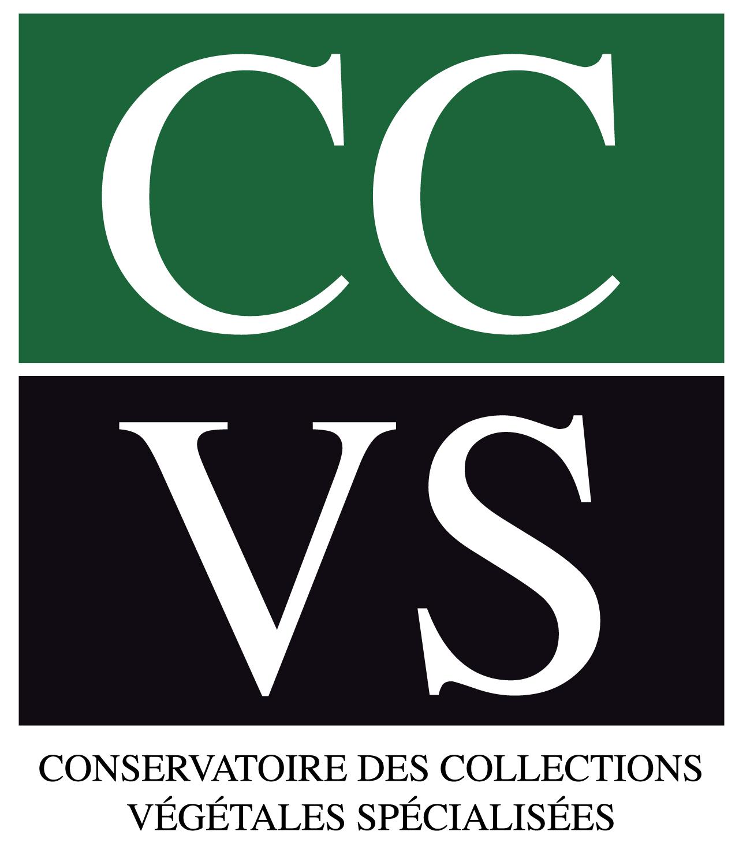 Logo CCVS